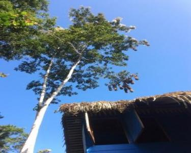 View Details of House Sitting Assignment in Puerto Viejo, Costa Rica